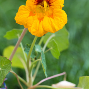170525_BBHF_garden_0006