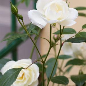 170525_BBHF_garden_0007