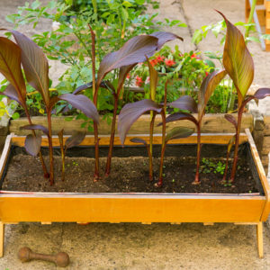 170615_BBHF_garden_07