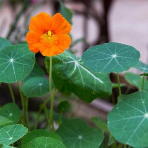 170710_BBHF_garden_07