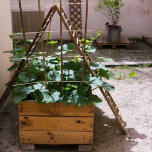 170710_BBHF_garden_11