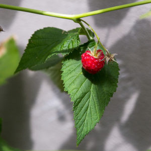 170710_BBHF_garden_18