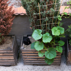 170714_BBHF_garden_1